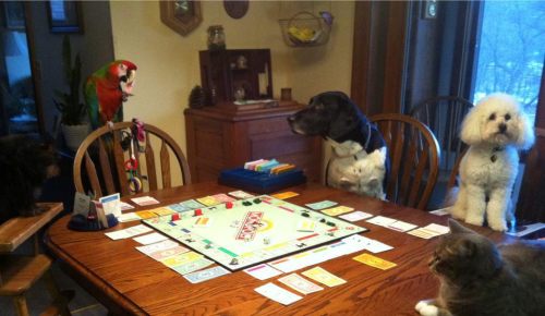 just some animals playing monopoly