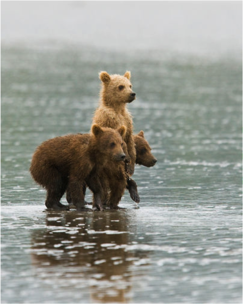 blaze-that-haze:  jesus bears walking on water