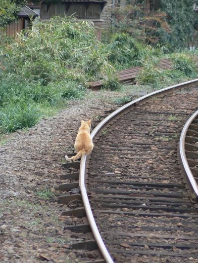 cybergata:  Rail Sitting