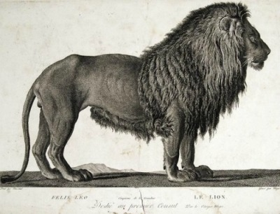 Simon Charles Miger, The lion (1800-01) Thx whitehotel