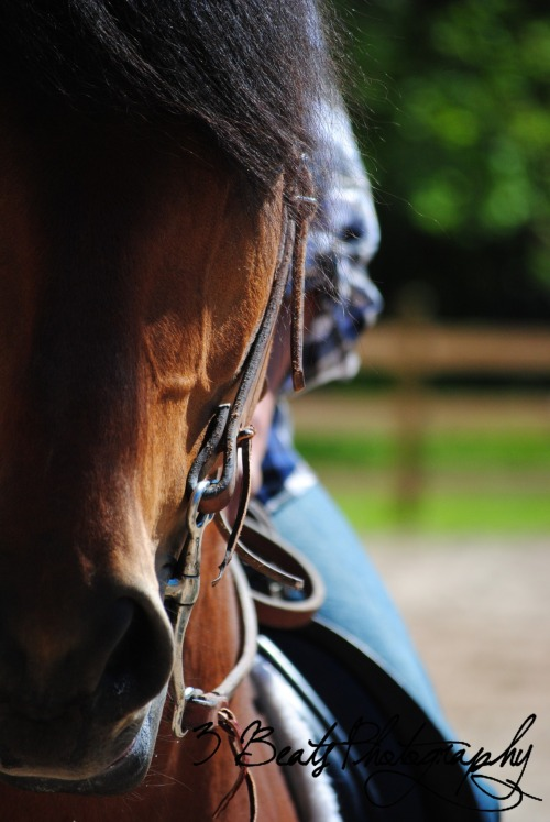 "equinegear:  ""Can I Help You?"" Paso Fino Gelding Copyright 3 Beats Photography"