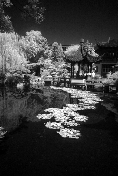 tahewitt:  The Chinese Garden in Portland.