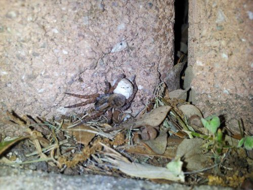 A mommy spider and her babies   submitted by thevisionandthevoice