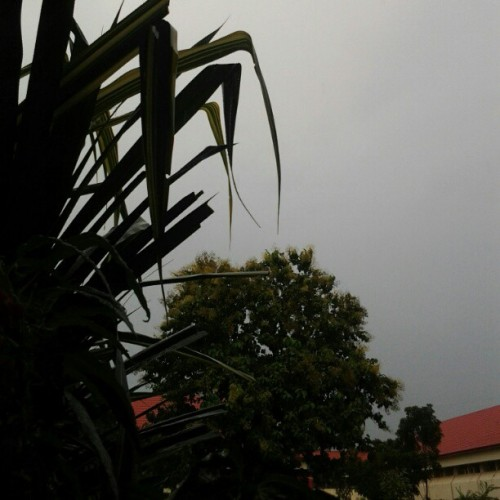 Look at the sky… Yes, It's raining. #rain #gloomy #nature #comforting #afternoon #afterclass #FIS #noedit  (Taken with instagram)