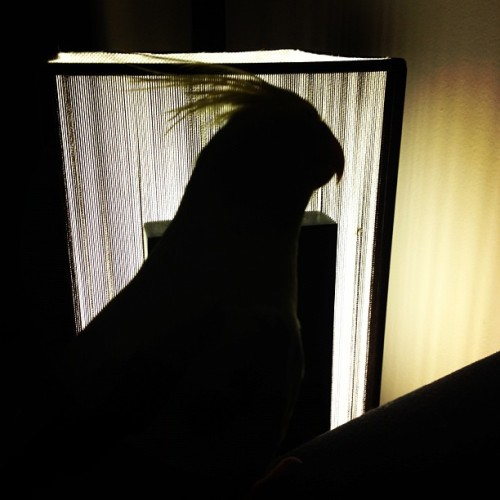 #bird #cockatiel #shadow (Taken with instagram)