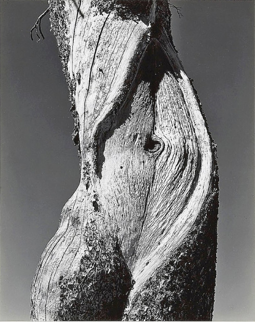 Edward Weston , Pine Lake Tenaya in Yosemite National Park (1937)  Awwwwwwwlove when nature does this to us…