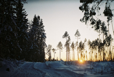 quaintmoon:  sunset in the woods by Liis Klammer on Flickr.