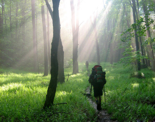 blackjackinmypants:  saltsmcds:  Appalachian Trail.  MNN says to get outdoors this weekend! :)