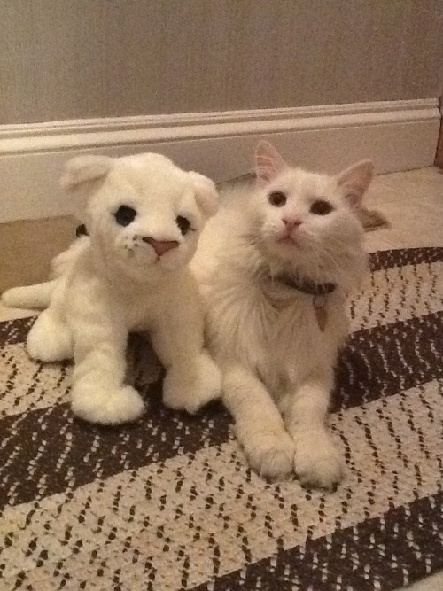 which one is the stuffed animal?? Submitted by Lauren