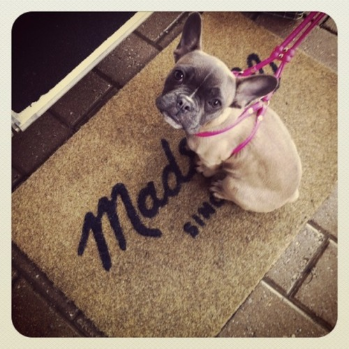 A furry friend stops by the Madewell Denim Roadtrip (and the crowd goes wild).