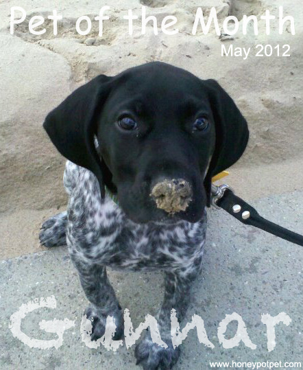Meet Gunnar. He is about three months old, visiting the beach for the first time in this picture. We adore his sandy, black nose and those innocent puppy dog eyes. Thank you for submitting this adorable picture, Sarah from Four Black Paws! Shop May's Favorites HERE!