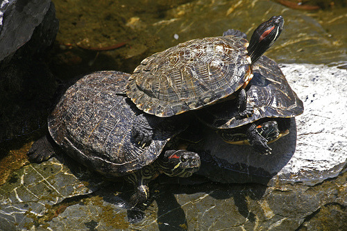 turtlesonturtles:  Photo by laszlo-photo