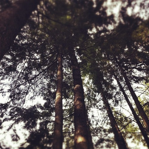Look up  (Taken with instagram)