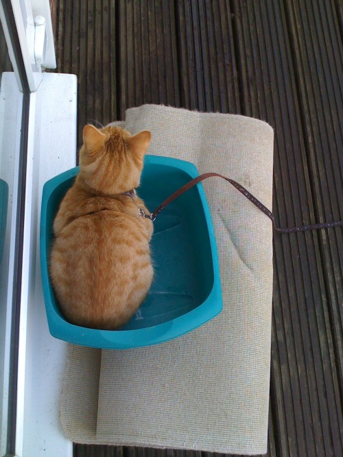 get out of there cat. you don't need to be washed up.