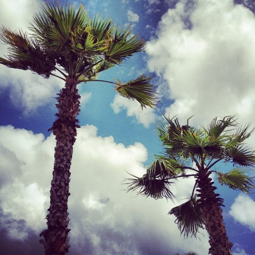 At least I have something to look at while I'm stranded. #tropical #palmtrees #tree #sky #clouds (Taken with instagram)