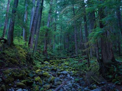 nationalgeographicmagazine:  Hoh Rain Forest, Olympic National Park Photograph by Wai Chee Wong, Your ShotMost people know about the Hoh Rain Forest in Olympic National Park, but only a few are lucky to discover the wonder near Sol Duc.  Download Wallpaper (1600 x 1200 pixels)