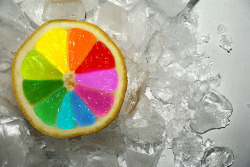 Colorful Lemon! | Flickr - Photo Sharing! on We Heart It. http://weheartit.com/entry/27795079