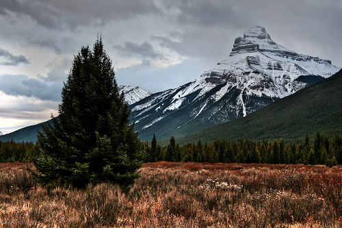 archenland:  Pilot Mountain above Moose Meadow, Banff National Park (by hflowers)