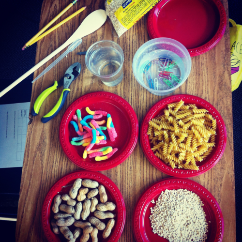 "adiemtocarpe:  Meanwhile, in 4th grade… Eating like a BIRD!  In science, we are learning about habitats. Today's lesson focused on adaptations. Students used a variety of tools (wrenches, eyedroppers, wooden spoons, chopsticks, tweezers) to pick up (""eat"") tons of food! We had gummy worms, bird seed, peanuts to represent large seeds, water for nectar, paper clips in water for fish, raisins as fruit, macaroni for snails… Tons of stuff! Students had 15 seconds to pick up as much food with their ""beaks"" as they could. We then discussed which beaks work best for what type of food, and how birds have adapted for such reasons. Awesome!"