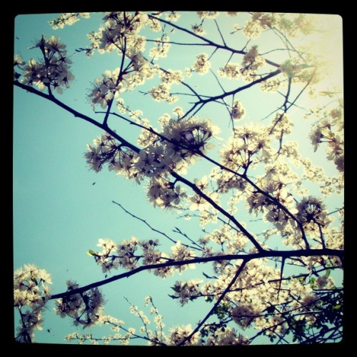 pretty huh?? :) #flowers #pretty #nature #photography  (Taken with instagram)