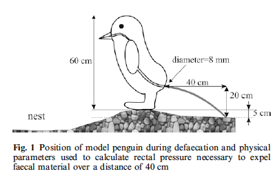 ilovecharts:  Some penguins are able to expel their poop with such great pressure that it lands far away from their nest, thus keeping their homes tidy. Scientists calculated the pressure that penguins would need to send their poop flying a given distance, and this chart outlines the parameters they used in their model. Click on the photo for the complete paper.  Ahhhhhh…..SCIENCE!