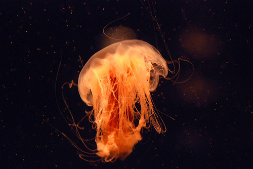 aquaticwonder:  (by ∞madison)