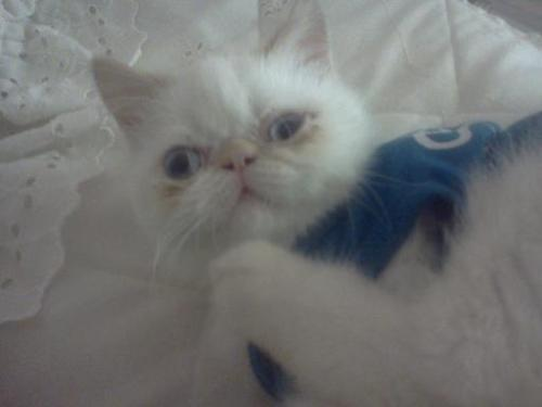 get out of that shirt cat.  you don't need fashionable clothes to look cute.  in fact you don't need clothes at all!