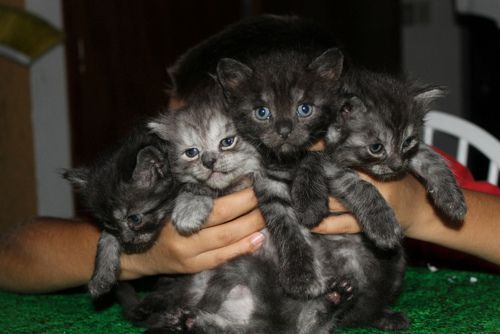 llbwwb:  Who wants a Kitty? via:cutestuff. Todays Cuteness :)