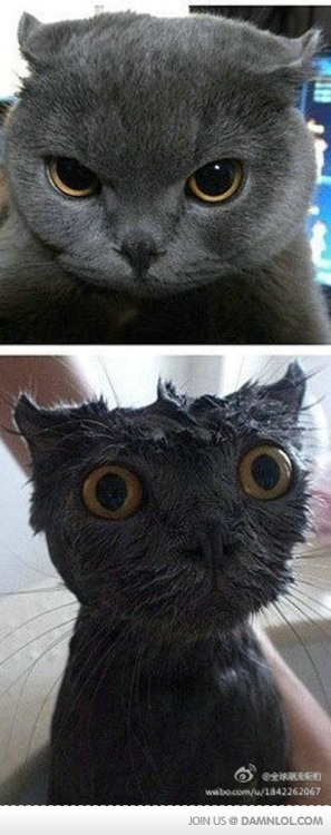 epiccutewinfail:  Look What That Damn Water Did To You!