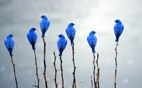 Little bluebirds, I love you.