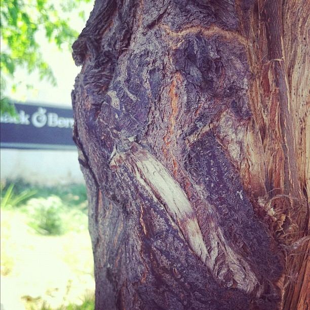 Tree (Taken with instagram)