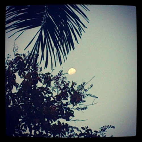 Bulan sore (Taken with instagram)