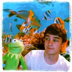 Liam and Kermit #niall #zayn #liam #harry #louis #niallhoran #harrystyles #liampayne #zaynmalik #louistomlinson #boys #cute #hot #one #direction #1d #1dfamily #onedirection #onedirectionfamily #directioners #love  (Taken with instagram)