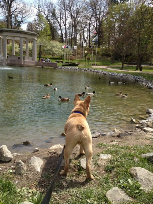Ducks? What is a duck?  I could swim mom, really just unclip me. Pleeease!