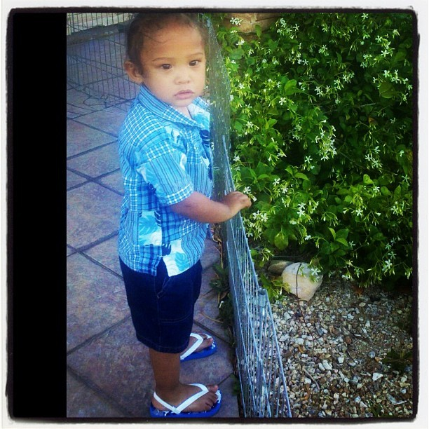 BOO BOO BEAR looking at the garden! #socute  (Taken with instagram)