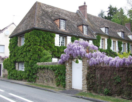 stone walls and wisteria