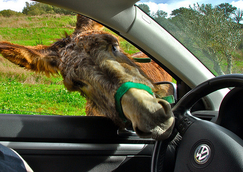 A donkey driving? EEE OOOR EEE ORRR EEE ORRR t' know better! flipyeah:  You Drive Like An Ass!