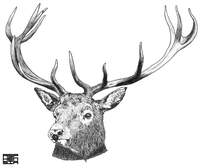 Cervus Elaphus Since I really enjoyed drawing those Deers for Waking Aida I thought I would draw another. This was pretty fun to create and I think I'll try some more animals. Soon to be available as a T-Shirt through my online shop, Follow me on twitter for updates.