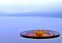 Lotus by the lake..!