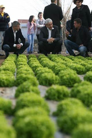 boris tadić supervising wasabi production
