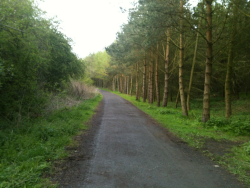 Durham is full of pretty paths like this :)