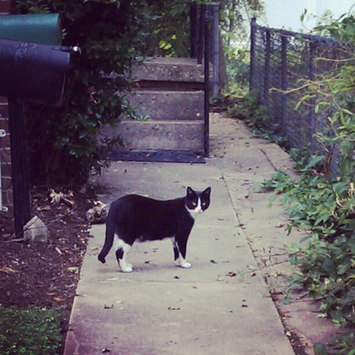 Caaaute kitty on my walk!  (Taken with instagram)