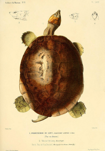 scientificillustration:  n70_w1150 by BioDivLibrary on Flickr.