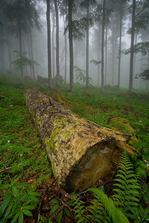 ecocides:  Trunk… | image by vincentfavre