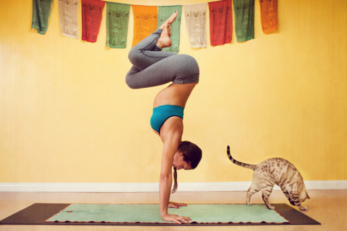 fit101:  keepcalmanddieton:  healthysoul:  this is perfect. the pose. the cat. the colors.  (via imgTumble) the banners :D