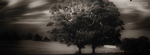 Vintage B&W Tree Facebook Cover