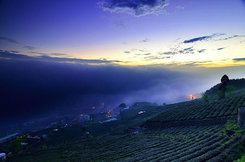 茶園暮色 Dusk over Shihjhou tea farm (by David-Shih)