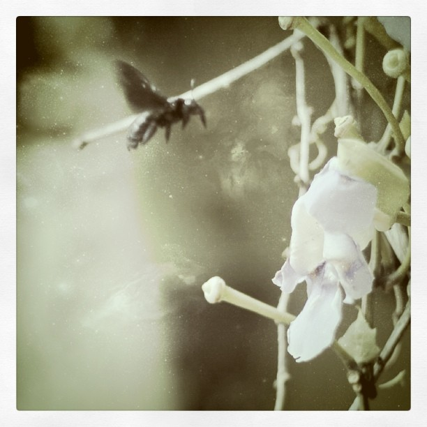 Flight of the fly (Taken with instagram)