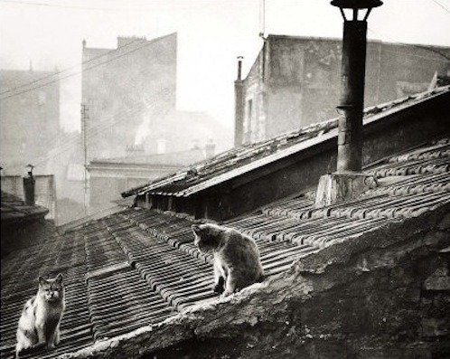 Edouard Boubat, Cats on a Roof, Paris, 1947