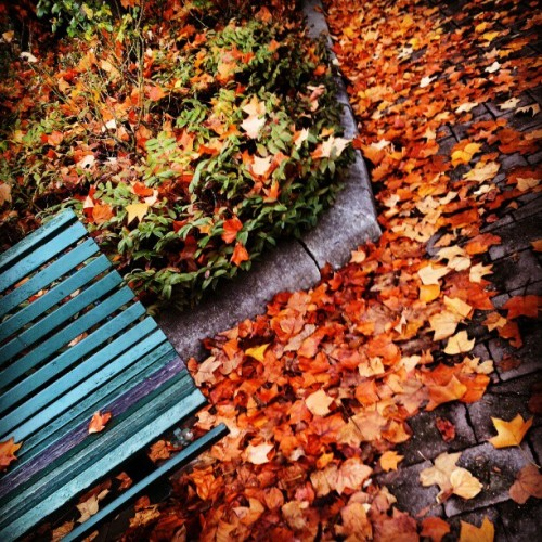 Leaf blowers can't keep up! #Canberra #autumn #leaves (Taken with instagram)